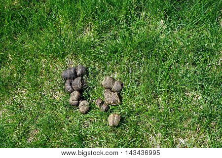 Dog feces lie on a lawn during the Spring.
