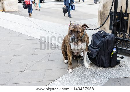 leashed dog sitting beside a rucksack in the city