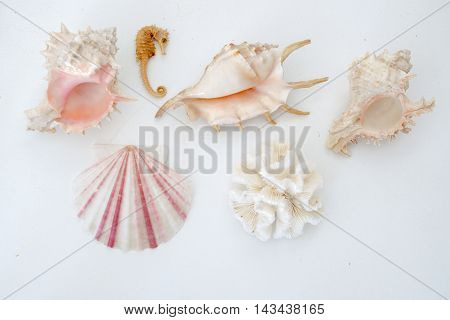 Various types of sea shells and a sea horse isolated on white