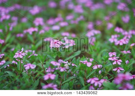 Colorful Flower Bed At Park
