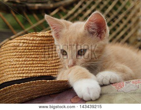 red, kitten, straw, hat, animals, straw, garden, cat, summer