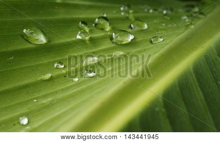 Close up of raindrops of a palm leaf.