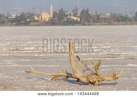 Broken tree branch on dry Larnaca salt-lake with Hala Sultan Tekke in the background
