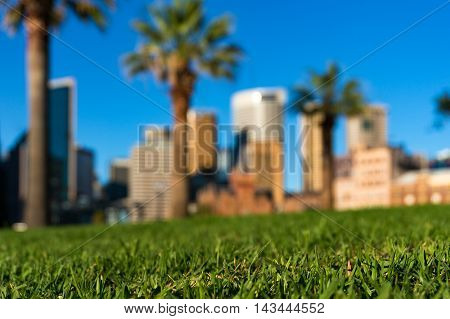 Green Grass And Skyscrapers. Urban Nature Concept