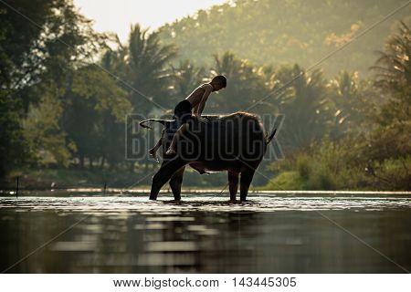 Asia boy riding water buffalo in countryside .