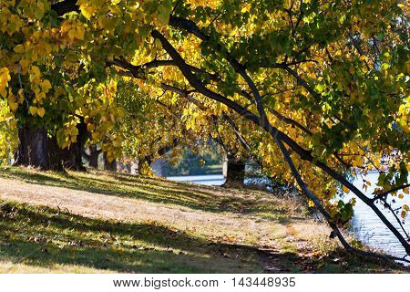 Autumn In Barton Park, Canberra