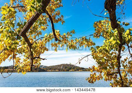 Autumn Leaves In Bowen Park