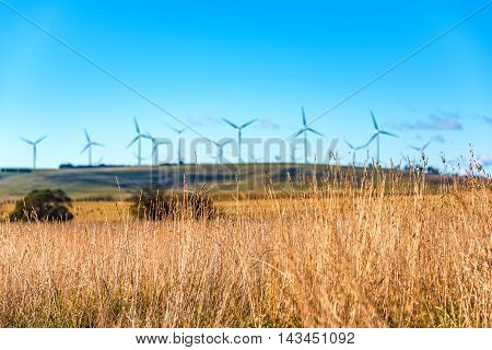 Close Up Of Dry Grass With Blurred Windmill Electricity Turbines