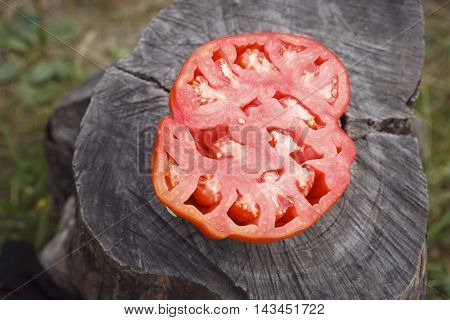 Fresh Crop Of Large Tomatoes