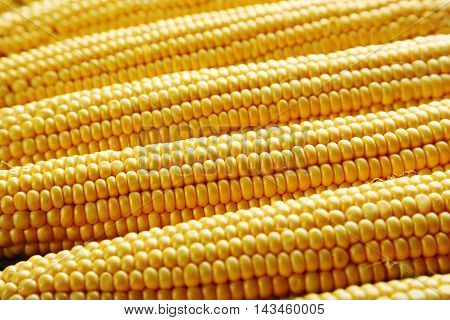 Sweet and ripe corns background, close up