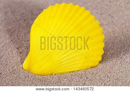 Yellow sea shell of mollusk lying on the sand close up