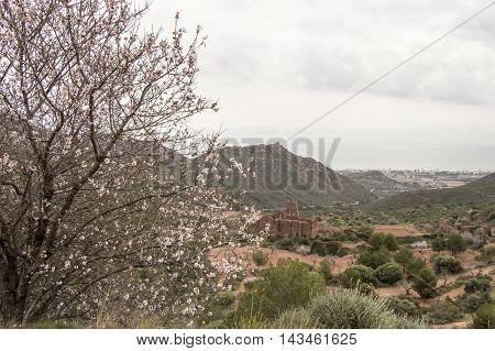Tree and sea in Castellon, Valencia, Spain.