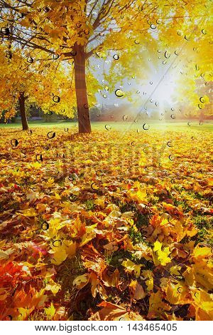 glass rain drops falling and the fallen leaves in autumn image