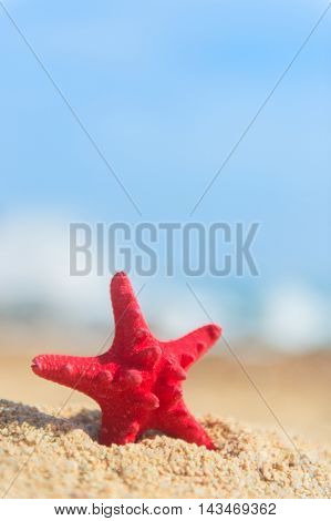 Red starfish standing at the beach
