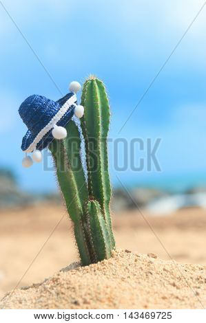 Cactus plant with Spanish Sombrero at the beach