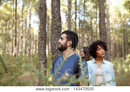 Three friends looking thoughtfully up into the pine tree forest in the late afternoon sunshine while wearing casual clothing