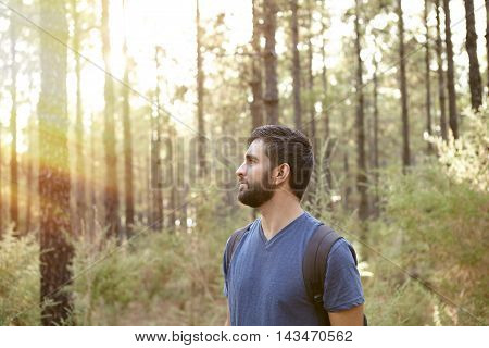 Young Man In The Pine Forest