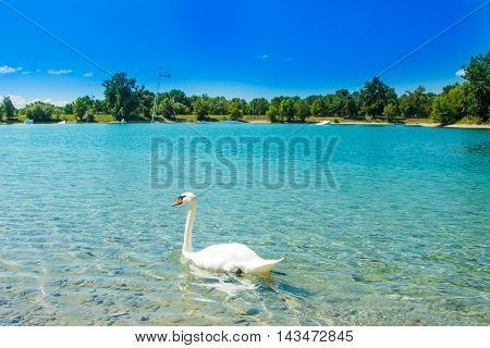 White swan on beautiful Jarun lake in Zagreb, Croatia, sunny summer day, green island in background