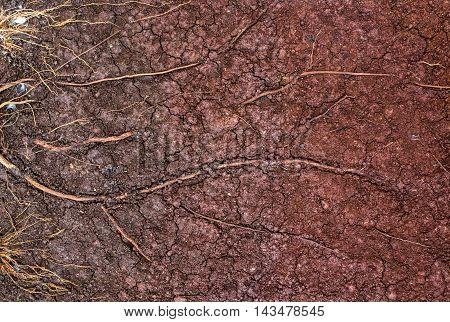 Layer of dry soil cracks to the root.