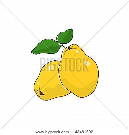 Yellow Quince Isolated on White, Tropical Fruit Quince, Vector Illustration