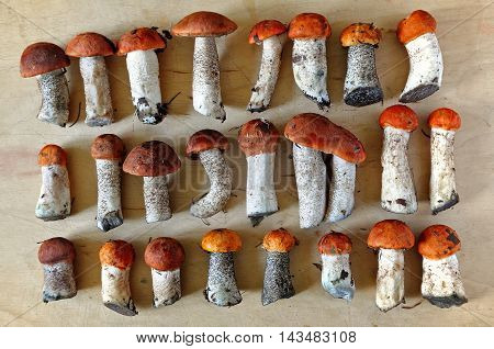 Fresh edible mushrooms with red caps and white trunks on a wooden surface. View from above.