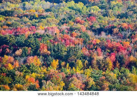 A colorful Wisconsin hillside view of fall trees in October.-1.jpg