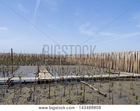 Bamboo barrier for mangrove forest under blue sky at Bangpu Recreation Center Samut Prakan Thailand