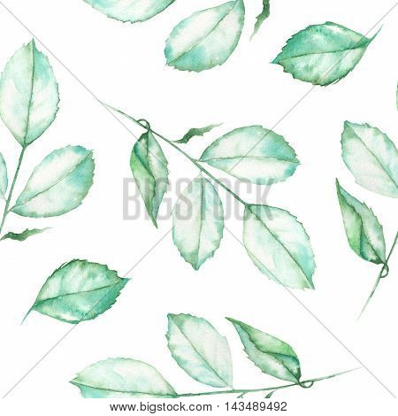 A seamless floral pattern with the watercolor roses leaves on a white background