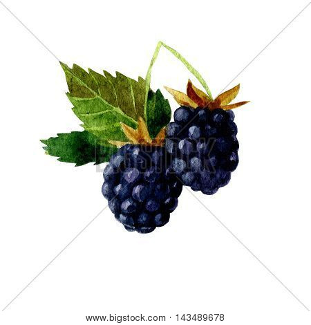 watercolor illustration depicting branches with berries and blackberry leaves. drawing watercolor. Watercolor sketch of blackberries on a white background