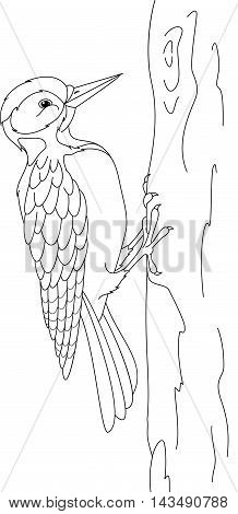 Woodpecker on tree, on white background. Coloring Page
