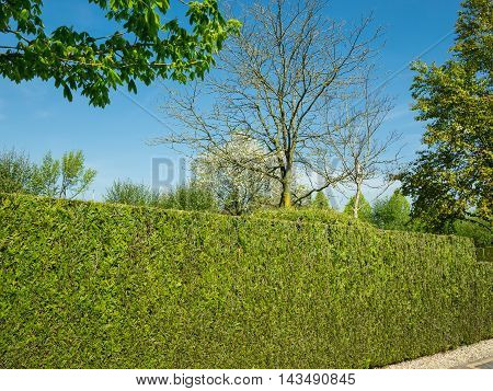 Tight green hedge trees behind it against blue sky
