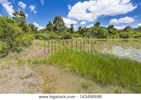 Lily Lake In Karura Forest, Nairobi, Kenya