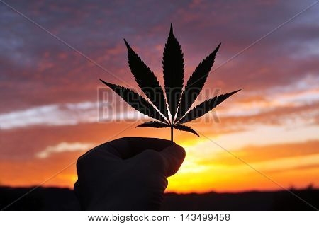 Silhouette of a hand holding cannabis leaf at sunrise