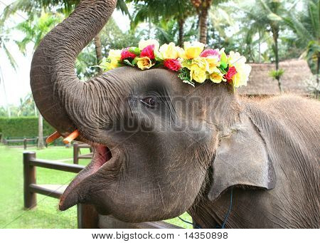 Baby Asian elephant playing with a flower garland, in an elephant park in Bali, Indonesia.