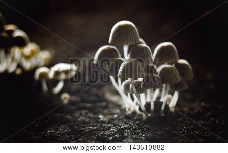 Small mushrooms toadstools. Selective focus. Back light