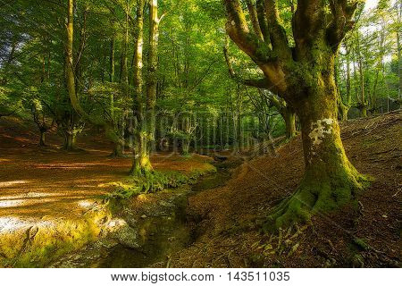 Tree roots in a Green forest at summer