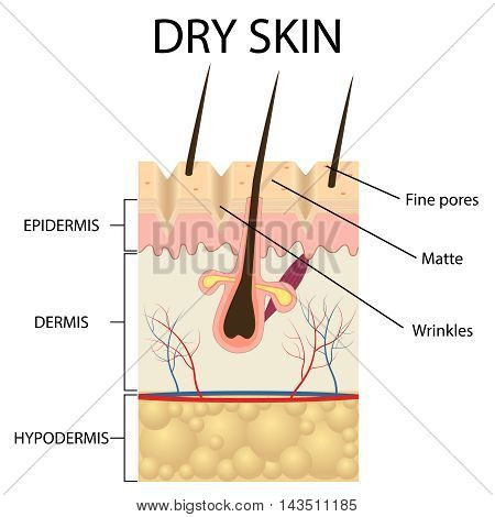 Illustration of The layers of dry skin on the white background.