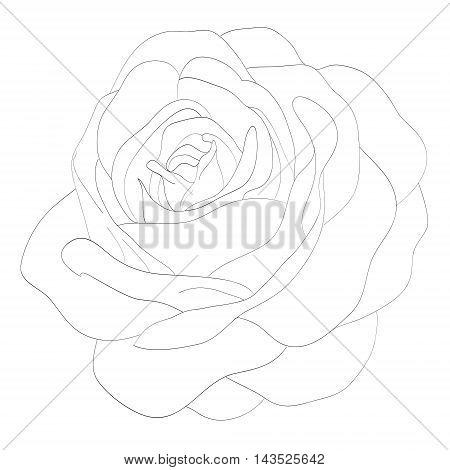 Beautiful monochrome black and white rose isolated on white background. Hand-drawn contour lines and strokes.