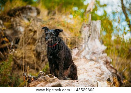 Small Size Black Mixed Breed Dog Sitting On Trunk Of Fallen Tree