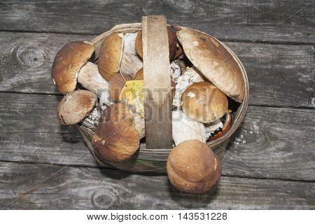 basket of brown porcini on wooden background
