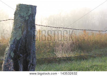 Spiderweb on a fence, covered in dew, on a foggy morning.