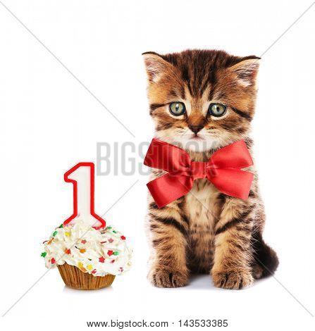 Small cute kitten with red satin bow and birthday cupcake , isolated on white