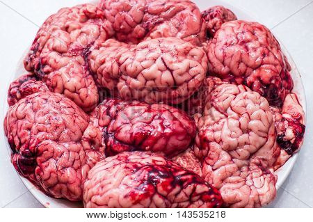 Brain on ispolated white background raw meat brains for cooking