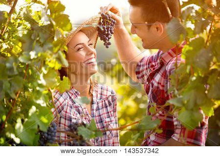Young man  feed his girl with grapes in vineyard
