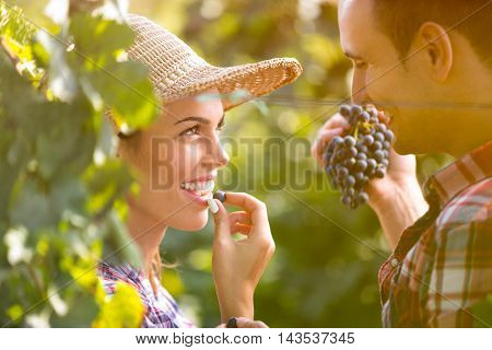 Romantic couple tasting grapes on sunny day  in vineyard