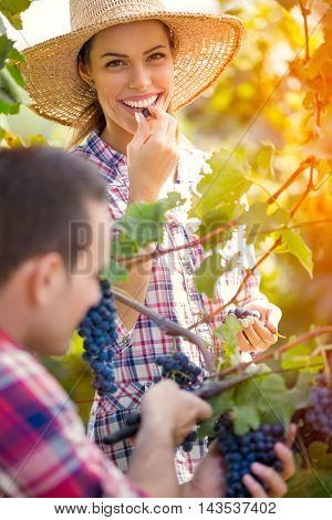 Young happy couple together working in vineyard