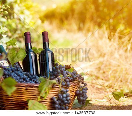 basket of wine bottles in vineyard