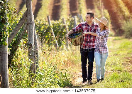 Couple enjoying in walking through the vineyard, walking embraced