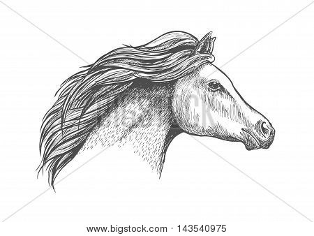 Racehorse mare head sketch with flowing curly mane. Horse racing badge or equestrian eventing symbol design