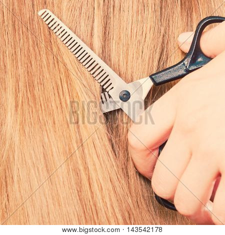 Professional cutting and barber shop. Close up of detail equipment black special scissors cut blonde straight long smoothy hair.